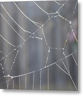 Spider Web In Rain Metal Print by Cheryl Miller