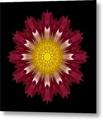 Spoon Chrysanthemum I Flower Mandala Metal Print by David J Bookbinder