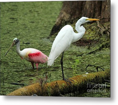 Spoonbill And Egret Metal Print by Theresa Willingham