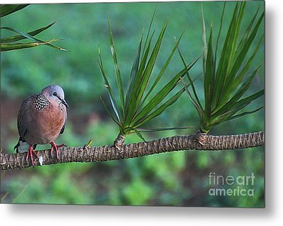 Spotted Dove Metal Print by Elizabeth Winter