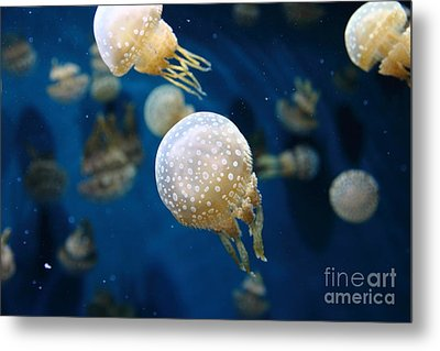 Spotted Jelly Fish 5d24949 Metal Print by Wingsdomain Art and Photography