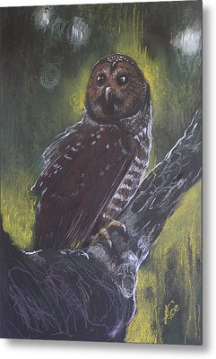Spotted Owl Metal Print by Alicja Coe