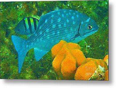 Spotted Surgeon Fish Metal Print by John Malone