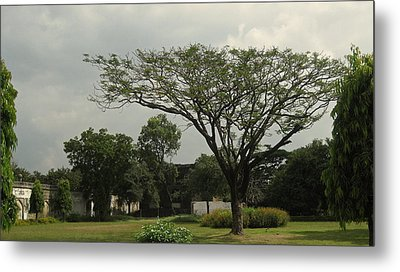 Spreading Tree Metal Print by Russell Smidt