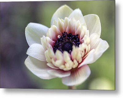 Spring Center Metal Print by Caitlyn  Grasso
