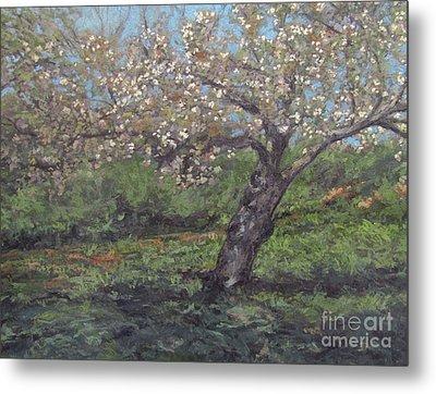 Spring Cherry Blossoms Metal Print by Gregory Arnett