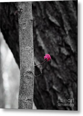 Spring Growth Metal Print by Steven Ralser