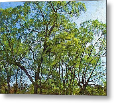 Spring Leaves In The Willows Metal Print by Joy Nichols
