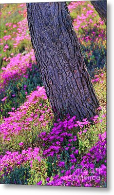 Spring Meadow Metal Print by Mariola Bitner