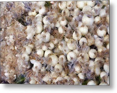 Spring Onions At The Market Metal Print by Michelle Calkins
