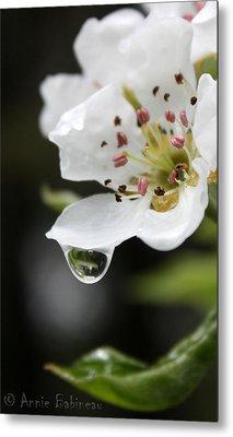 Spring Rain Metal Print by Anne Babineau