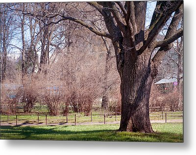 Spring Tree At Soft Rosy Spring In The Garden Metal Print by Jenny Rainbow