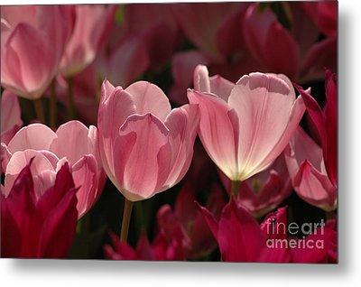 Spring Tulips Metal Print by Kathleen Struckle