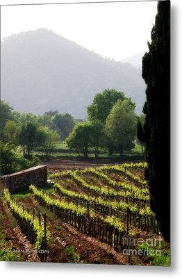 Spring Vines In Provence Metal Print by Lainie Wrightson