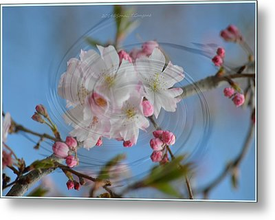 Springing Blossoms Metal Print by Sonali Gangane
