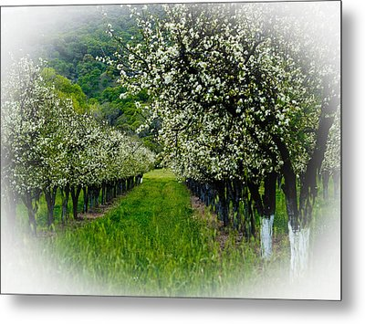 Springtime In The Orchard Metal Print by Bill Gallagher