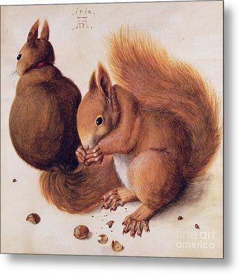 Squirrels Metal Print by Albrecht Duerer