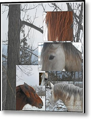 Stallions Collage There Is A Connection Metal Print by Patricia Keller
