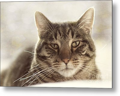 Stare Into My Eyes Metal Print by Juli Scalzi