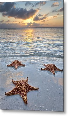 Starfish Beach Sunset Metal Print by Adam Romanowicz