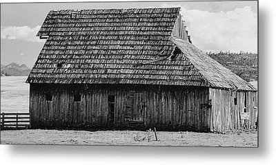 Stark Starkey Metal Print by Lynne and Don Wright