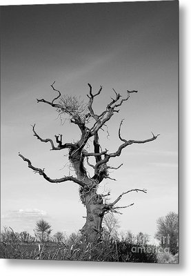 Stark Tree Metal Print by Pixel Chimp