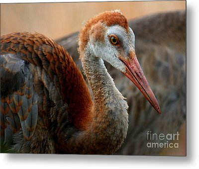 Staying Close To Mom Metal Print by Carol Groenen