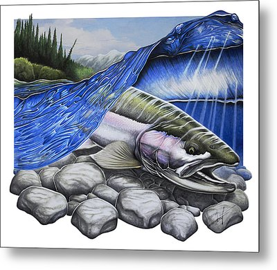 Steelhead Dreams Metal Print by Nick Laferriere
