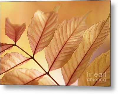 Stems Metal Print by Andrew Brooks
