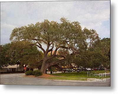 Stop And Rest Metal Print by Kay Pickens