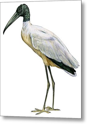 Stork Metal Print by Anonymous