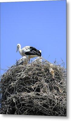 Storks Nesting Metal Print by Photostock-israel