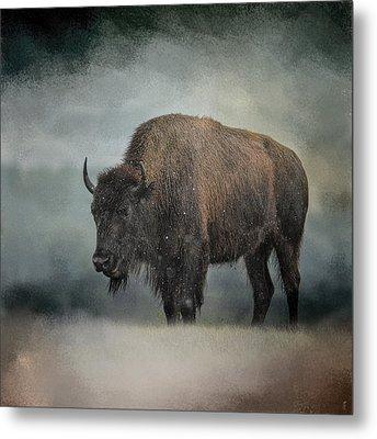 Stormy Day - Buffalo - Wildlife Metal Print by Jai Johnson
