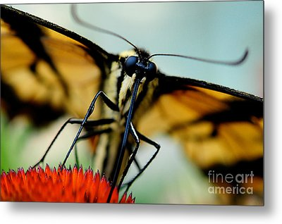 Straight On For You Metal Print by Lois Bryan