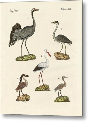Strange Beach Birds Metal Print by Splendid Art Prints
