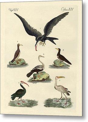 Strange Marsh-birds And Waterbirds Metal Print by Splendid Art Prints