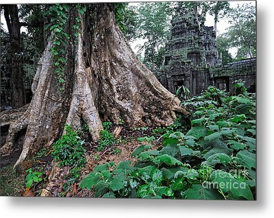Strangler Fig Tree Roots On The Ancient Preah Khan Temple Metal Print by Sami Sarkis