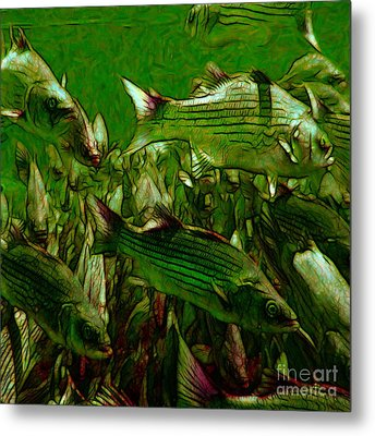 Striped Bass - Painterly V2 - Square Metal Print by Wingsdomain Art and Photography