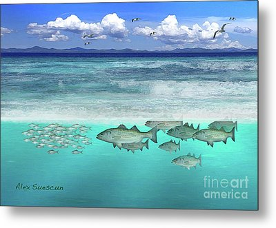 Stripers In The Surf Metal Print by Alex Suescun