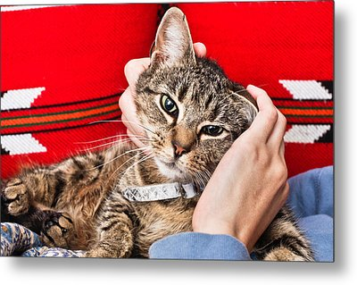 Stroking A Cat Metal Print by Tom Gowanlock