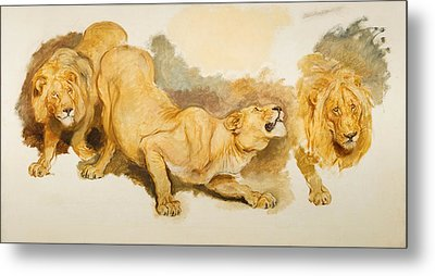 Study For Daniel In The Lions Den Metal Print by Briton Riviere