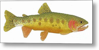 Study Of A Rio Grande Cutthroat Trout Metal Print by Thom Glace
