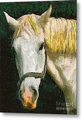 Study Of The Horse's Head Metal Print by Dragica  Micki Fortuna