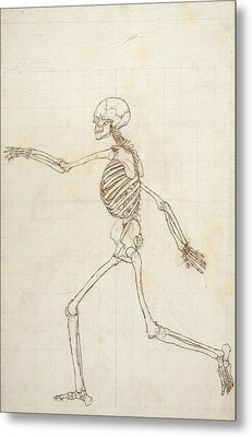Study Of The Human Figure, Lateral View, From A Comparative Anatomical Exposition Of The Structure Metal Print by George Stubbs