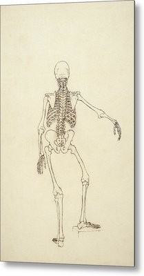 Study Of The Human Figure, Posterior View, From A Comparative Anatomical Exposition Metal Print by George Stubbs