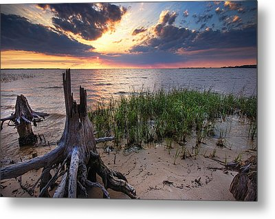 Stumps And Sunset On Oyster Bay Metal Print by Michael Thomas
