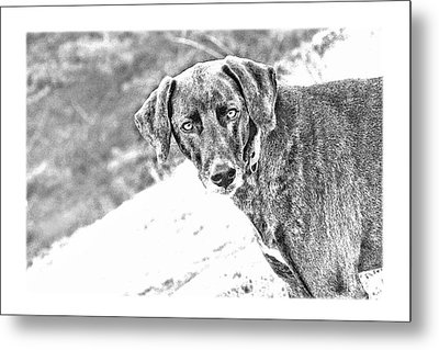 Such A Pretty Girl Metal Print by Peggy Collins