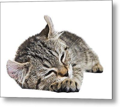 Such A Sleepy Kitten Metal Print by Susan Leggett