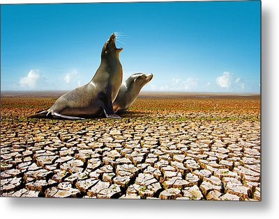 Suffering Seals Metal Print by Carlos Caetano