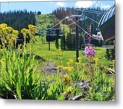 Summer At Wolf Creek Metal Print by William Wyckoff